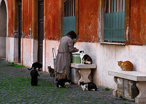 Cat lady - Woman feeding cats