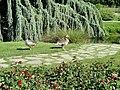 General view - Parc de la Tête d'Or - DSC05263.jpg