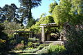 General view - San Francisco Botanical Garden - DSC09831.JPG