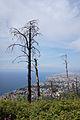 Genoa - trees.jpg