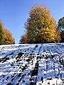 Georgia snow IMG 5704 (38932547032).jpg