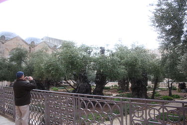 Gethsemane, Jerusalem in the rain 2.jpg