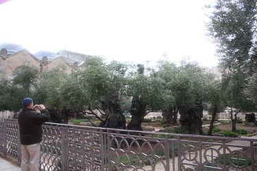 Gethsemane, Jerusalem in the rain 2.jpg