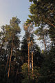 Gfp-wisconsin-buck-horn-state-park-trees-at-buckhorn.jpg
