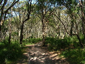 Glenrock Lagoon - A pocket of open forest in Glenrock