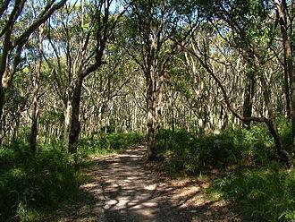 Glenrock Lagoon - A pocket of open forest in Glenrock