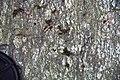 Gneiss (Precambrian; Mingus Mill roadcut, Great Smoky Mountains, North Carolina, USA) 3 (36948225536).jpg