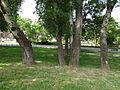 Gradski Park-Skopje (1).JPG