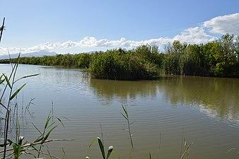 Gran Canal de Parc Natural de s'Albufera de Mallorca.jpg