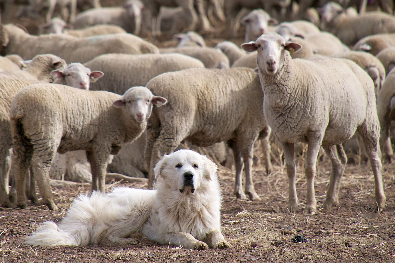 San Jose Dog Boarding That Keep Dogs On Quarantine