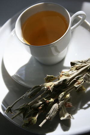 Sideritis - Ironwort herbal tea.