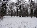 Großer Garten, Dresden in winter (1090).jpg