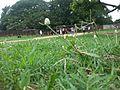 Ground of vollyboll at ratangarh.jpg