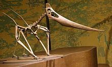 Grounded Pteranodon.jpg
