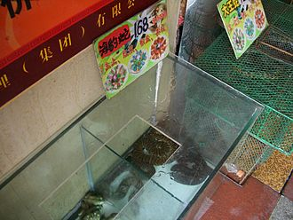 Snake farm - Live snakes are supplied to upscale Chinese restaurants