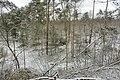 Hövelhof - Moosheide, Sturmschäden - 12.jpg