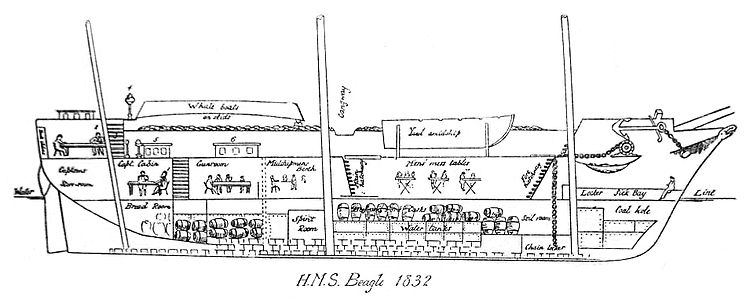 HMS Beagle longitudinal section as of 1832