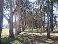 Hackett oval hackett act trees.jpg