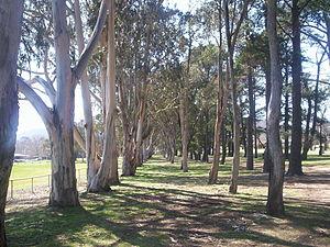 Hackett, Australian Capital Territory - Hackett oval