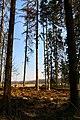 Hajnówka, Poland - panoramio (200).jpg