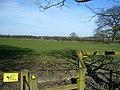 Halstead - geograph.org.uk - 361220.jpg