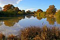 Hammer Farm Pond - geograph.org.uk - 280676.jpg