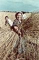 Harvesters, 1938 Hungary. - Fortepan 27221.jpg