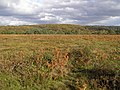 Heathland on Ocknell Plain, New Forest - geograph.org.uk - 267417.jpg