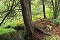 Hemlock Palustrine Forest (21179869989).jpg