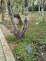Henri Reynders tree3.jpg