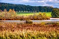 Herbst Eggelburger See.jpg