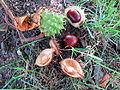 Herbst in Stumpfenbach.JPG