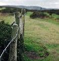 Hergest Fence - geograph.org.uk - 433940.jpg