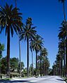 Highsmithbeverlyhillpalms.jpg