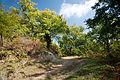 Hills forest (3338558462).jpg