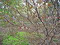 Hjartartré 1.jpg