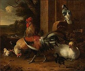 A poultry yard