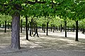 Horse-chestnut tree & Common Lime tree rows.jpg