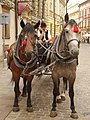 Horse carriage in Kraków.jpg