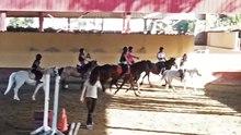 Dosiero: Horseball 20140620. ŭebm
