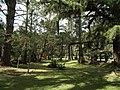 Horto Florestal. - panoramio (3).jpg