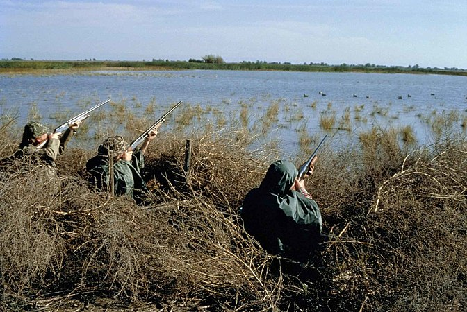 Hunters hunting waterfowl birds on swamp.jpg