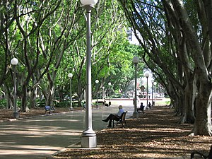 Parks in Sydney - A fig-lined avenue in Hyde Park, Sydney