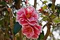 Hyogo Prefectural Flower Center Kasai Japan11bs.jpg