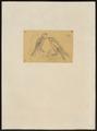 Hypotriorchis severus - 1700-1880 - Print - Iconographia Zoologica - Special Collections University of Amsterdam - UBA01 IZ18200187.tif