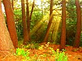 IL.LUMINAT¡¡¡ amb llum tot es veu millor....¡¡¡¡ per tu ANGEL g - panoramio.jpg