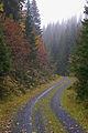I høstskogen (1462911253).jpg