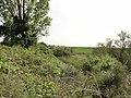 Il Boscone della Mesola - panoramio.jpg