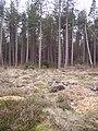 In Broxa Forest - geograph.org.uk - 395917.jpg
