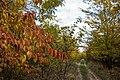 In the forest near Ubezhenskaya - panoramio (22).jpg